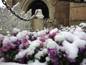 Pretty flowers covered in a blanket of wet snow.