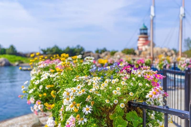 Spring flowers at Tokyo DisneySea in Cape Cod