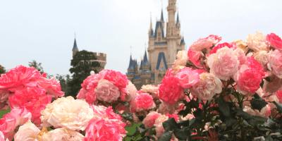 15 Things You Cannot Miss at Tokyo Disneyland