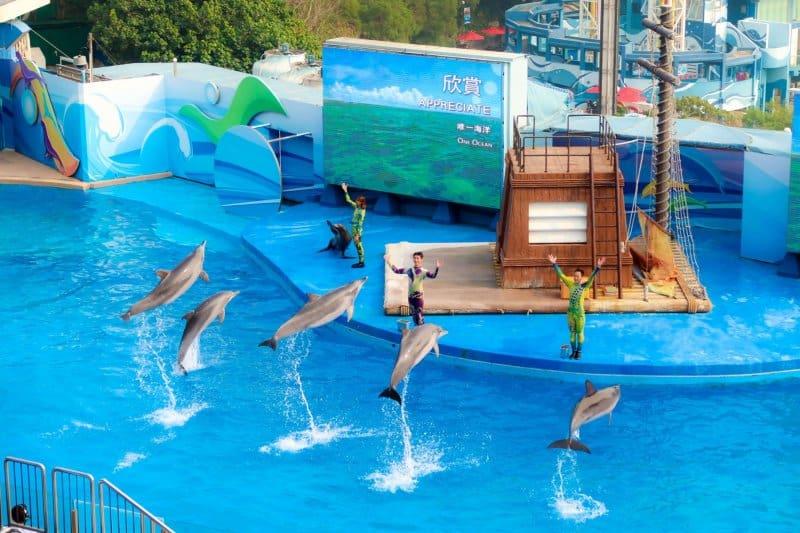 Ocean Park Hong Kong Dolphin Show