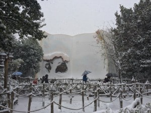 Winnie The Pooh's Hunny Hunt Story was completely erased due to the snow!