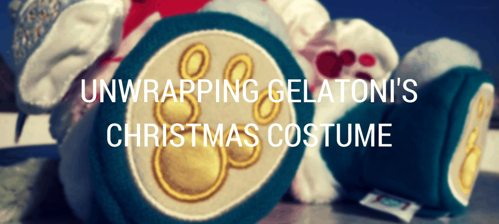 Unwrapping Gelatoni's Christmas Costume