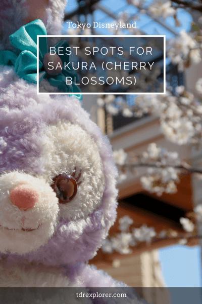 Best Spots Sakura Tokyo Disneyland
