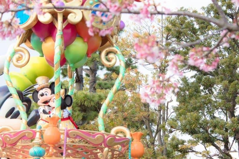Happiness is Here Sakura Cherry Blossoms