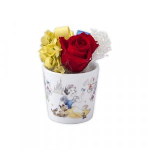 Snow White Preserved Flowers