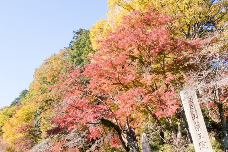 Mt Takao Fall Foliage