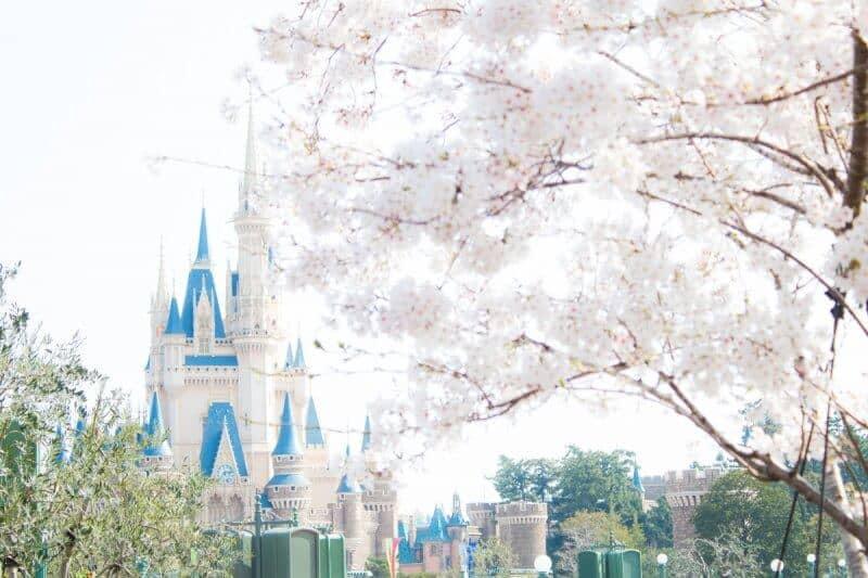 Sakura at Tokyo Disneyland
